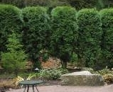 Bushes planted for privacy barrier by landscape company, Environmental Construction